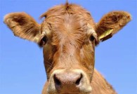 mercato_titoli_basket_vacche